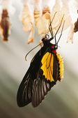 Fotografie Butterfly