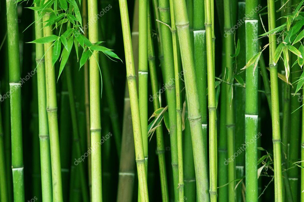 Bamboo.Bamboo Forest Wallpaper. Bamboo. Alphonse Karr