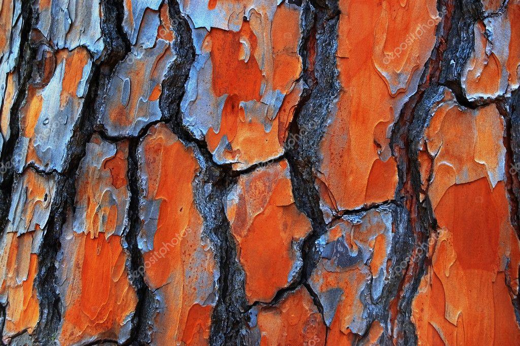 Gum Tree Bark Textures