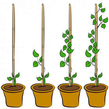 Growing Plant Stages