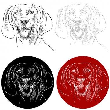 Redbone Coonhound Dog Portrait