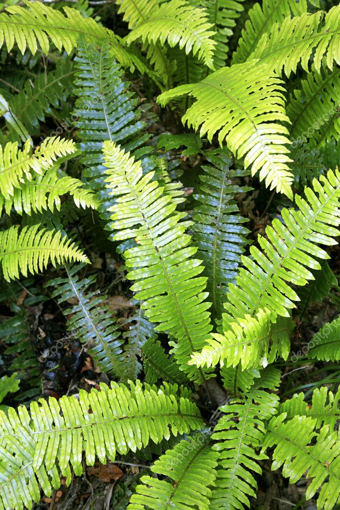 Closeup of fern leaves in tropical forest