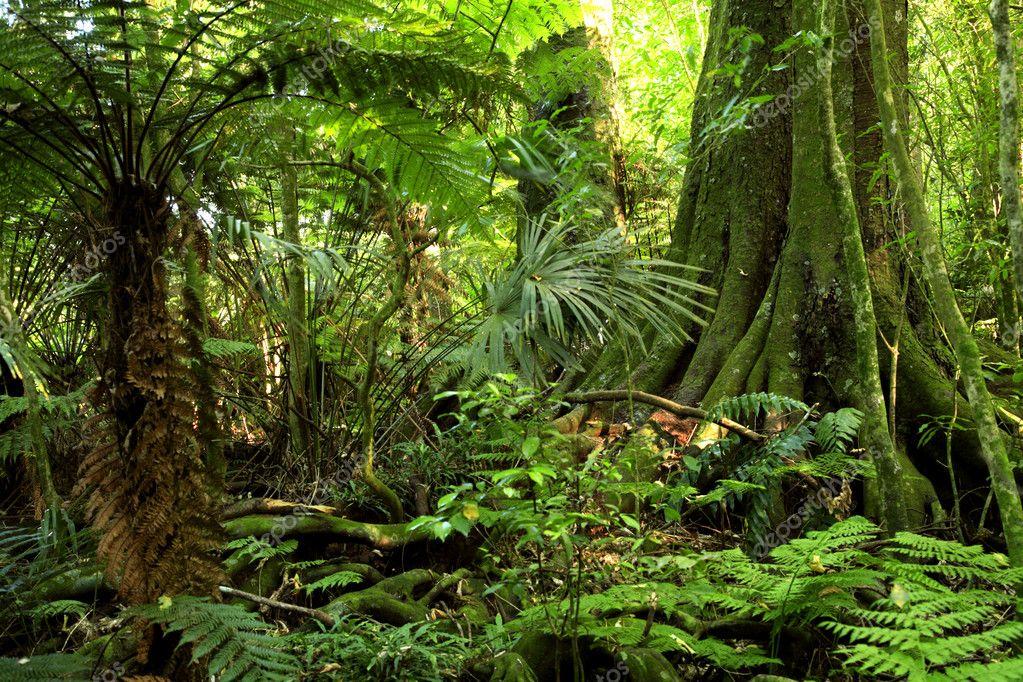 Фотообои Jungle