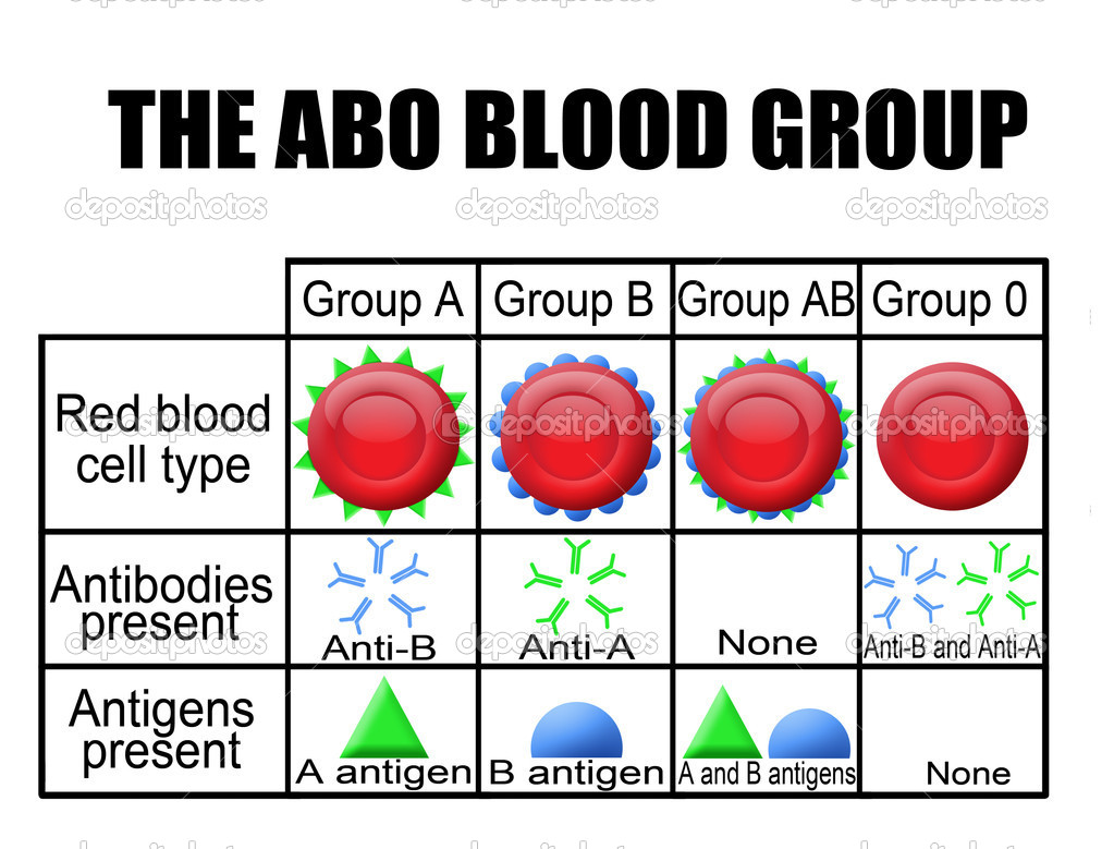 The abo blood group diagram stock vector roxanabalint 5627892 the abo blood group diagram stock vector pooptronica