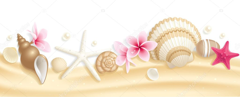 Seashell header