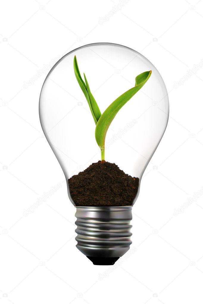 erneuerbare energien gl hbirne mit gr nen pflanzen innerhalb stockfoto ronstik 5572079. Black Bedroom Furniture Sets. Home Design Ideas