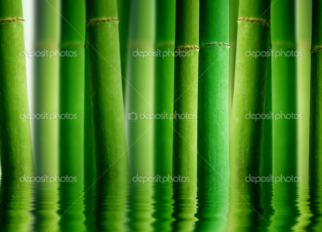 Bamboo Forest with Water reflection