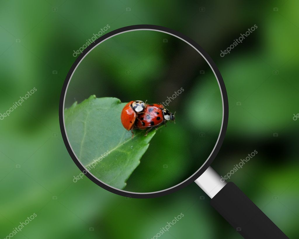 Magnifying Glass - Ladybugs