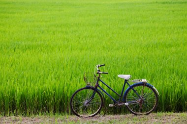 Old bicycle with paddy field background