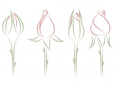 Rosebuds. Vector illustration.