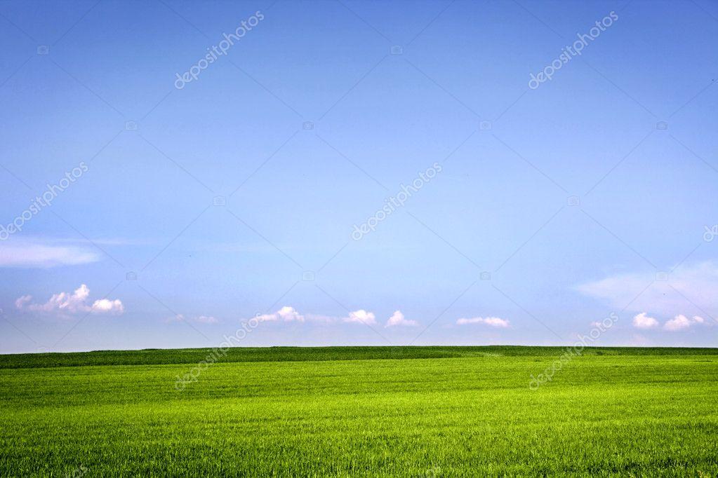 Фотообои Field of grass