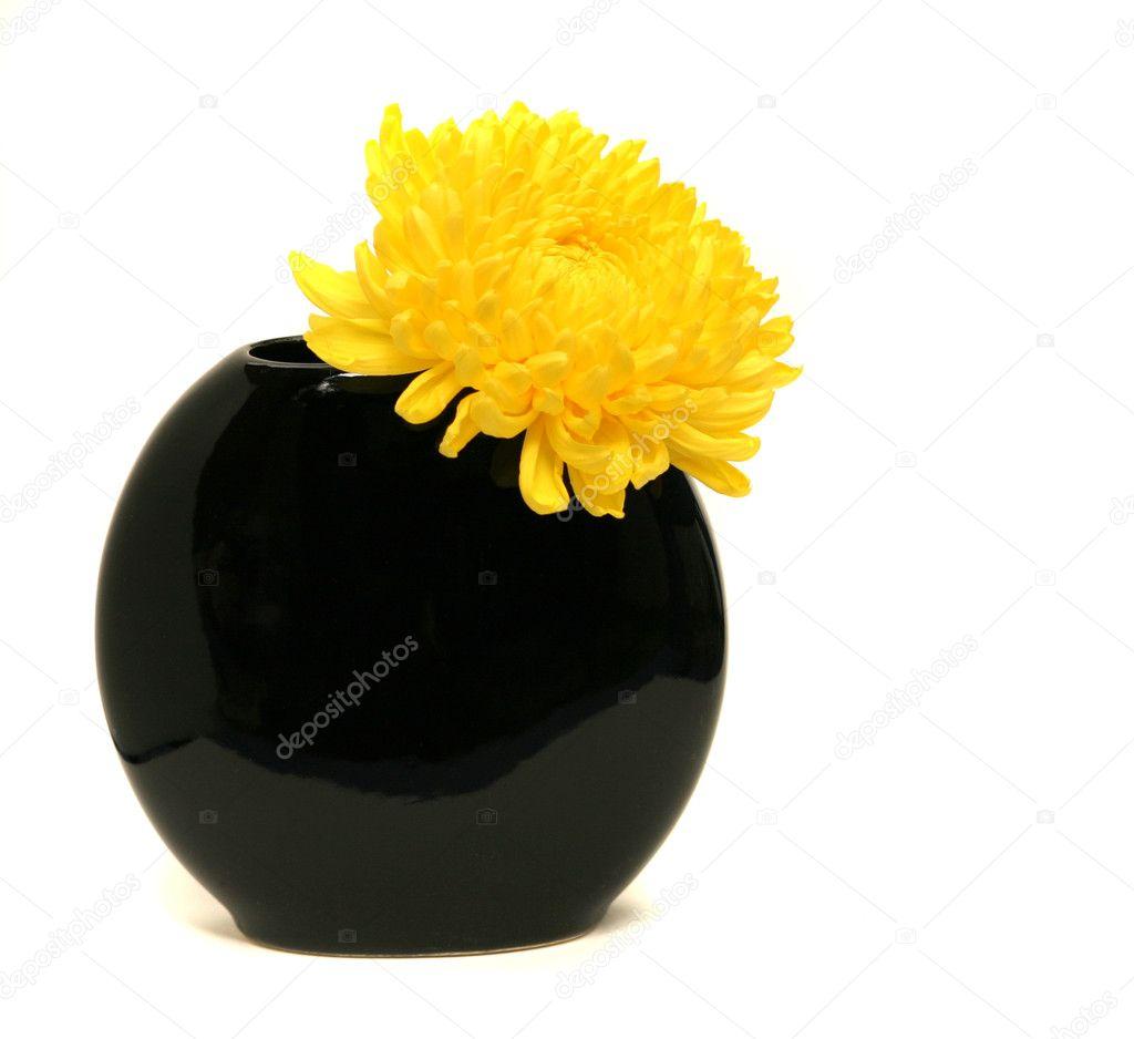 Yellow chrysanthemum in a black vase on white background stock yellow chrysanthemum in a black vase on white background stock photo reviewsmspy