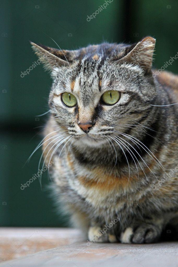 A cat portrait