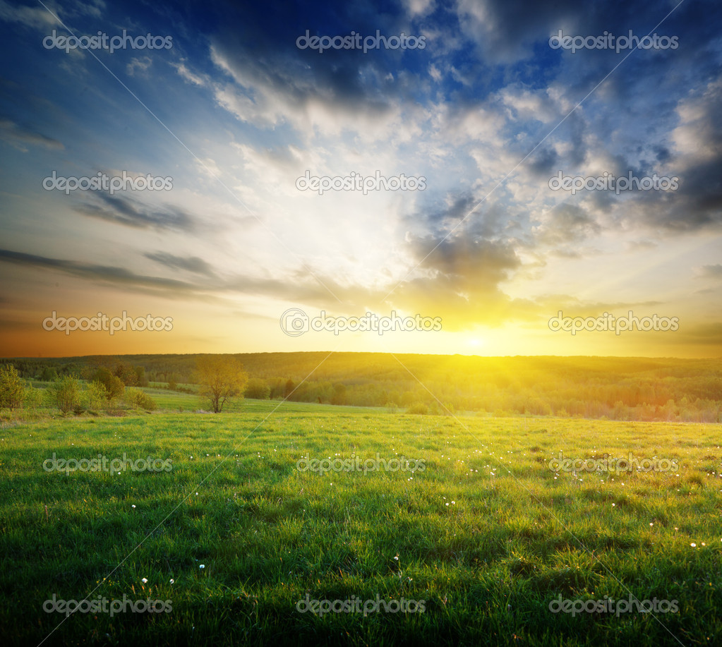 Фотообои Spring field of grass in Russia and sunset