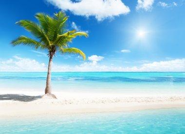 Palm on island
