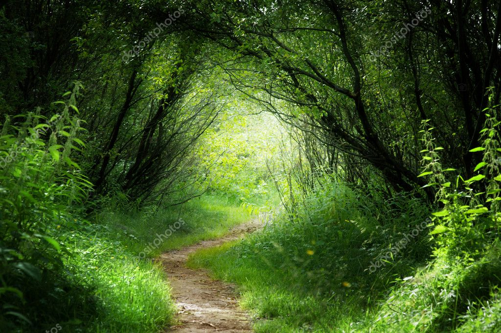Way in deep forest stock vector