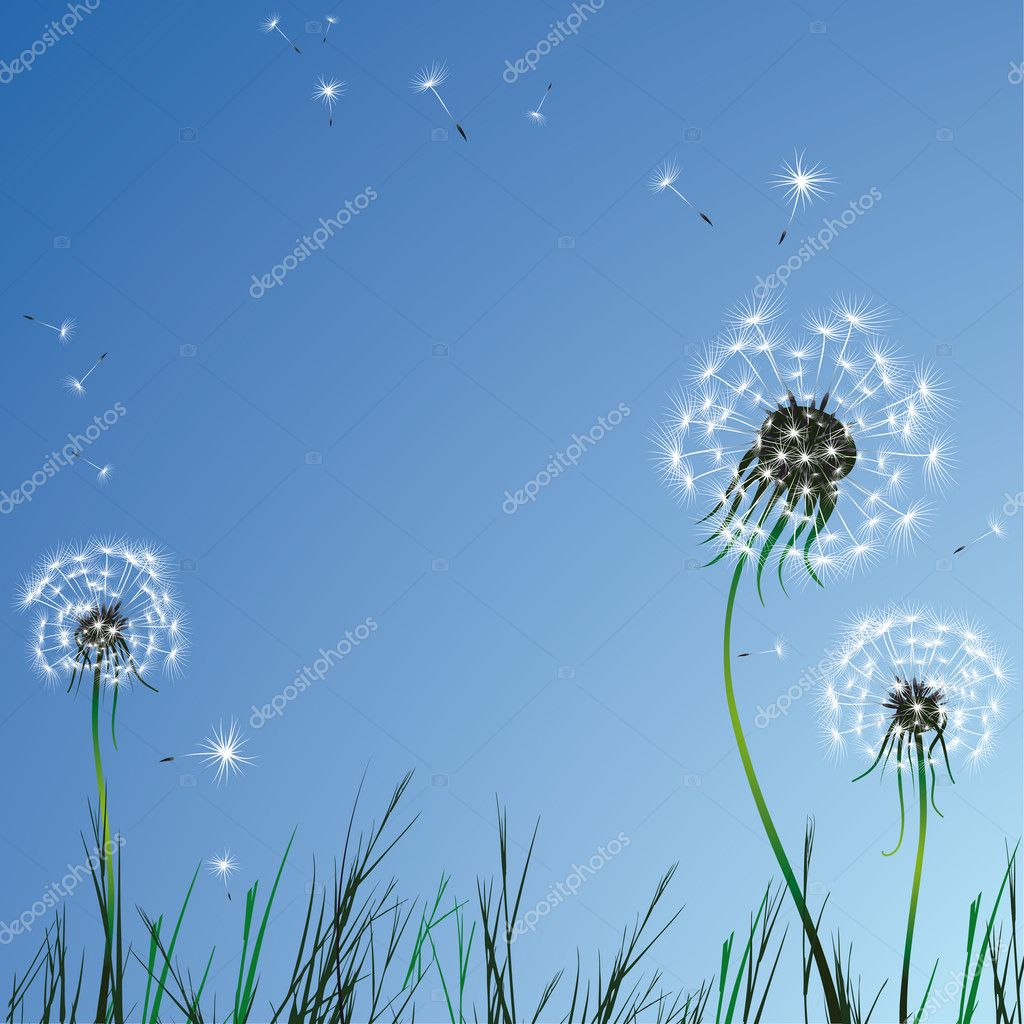 Realistic dandelions
