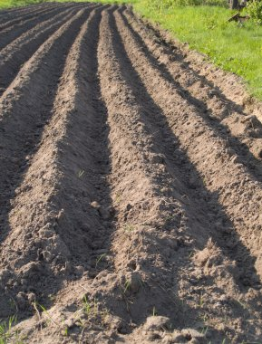 Plowed soil rows background