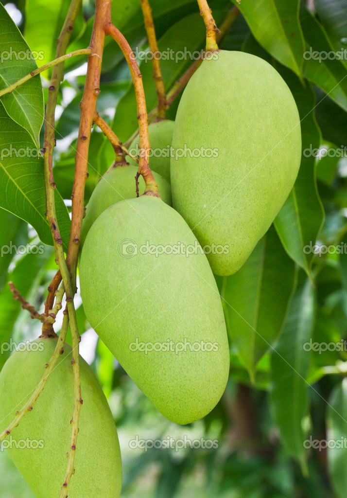 how to cut a mango australia