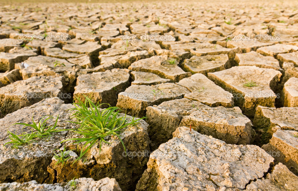 Cracked earth with grass