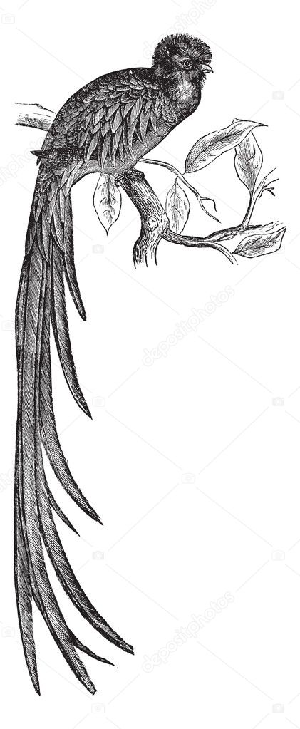 輝くケツァールまたは pharomachrus mocinno ビンテージ彫刻