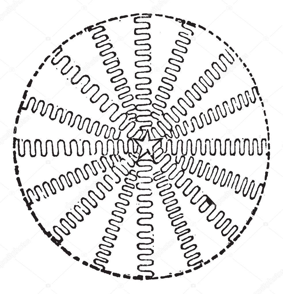 Ausbreitung des Lichtes nicht inertial Reference frames Vintage de ...