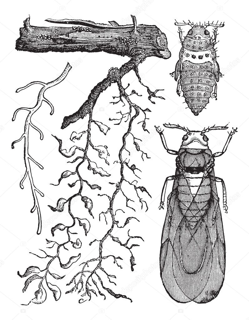 Various parts of insects, vintage engraving.