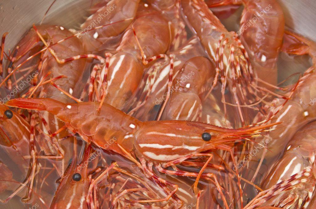 Bowl of Fresh live shrimp