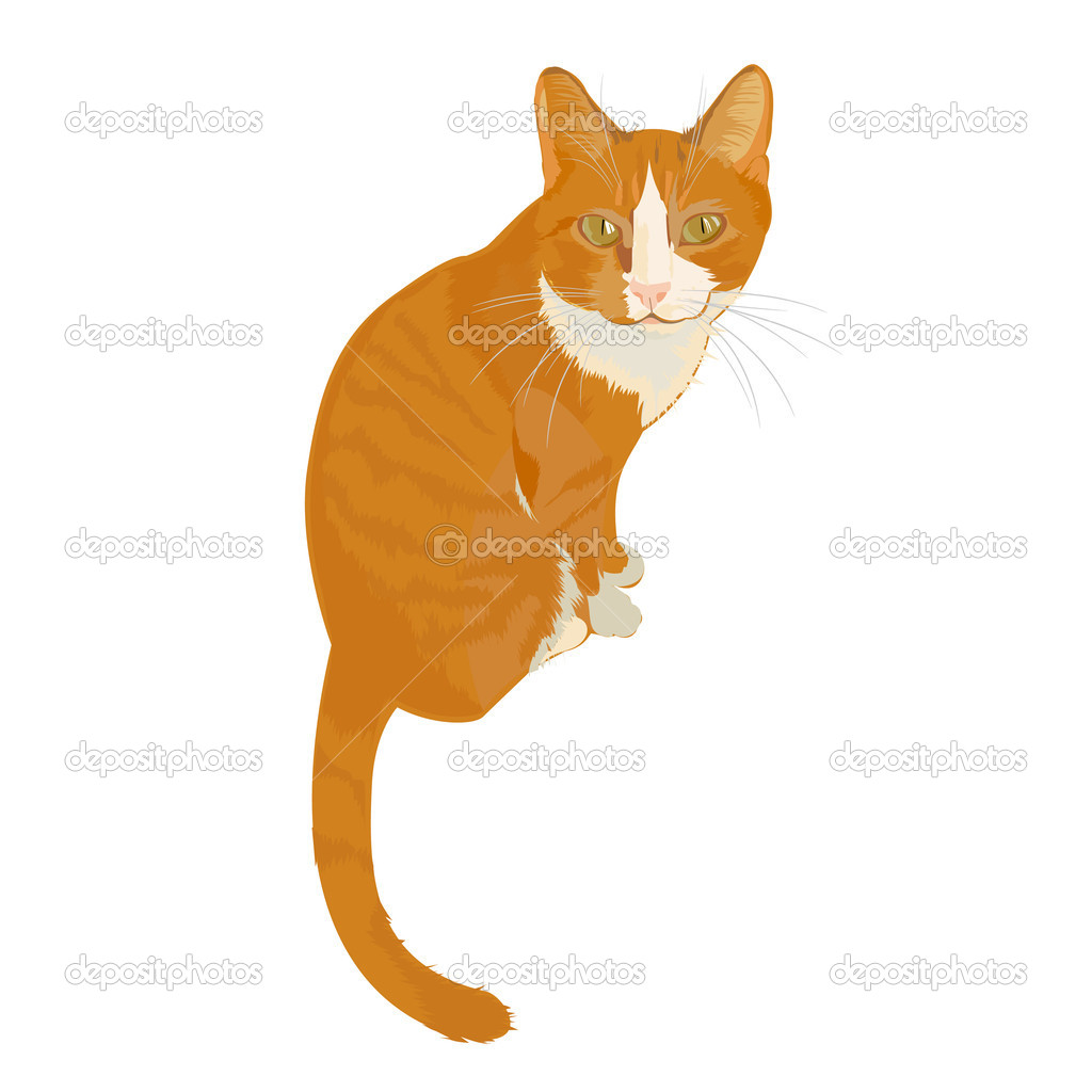 Cat with character