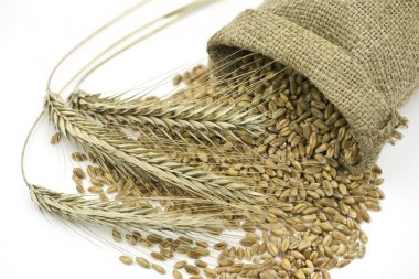Three Rye Ears Beside Liying Sack with Grain
