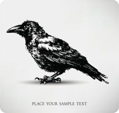 Raven Hand drawn high quality vector