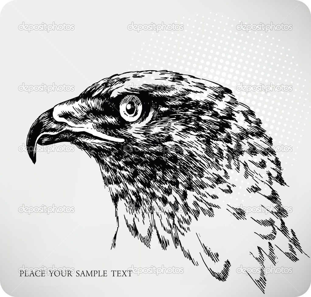 Buzzard hand drawing