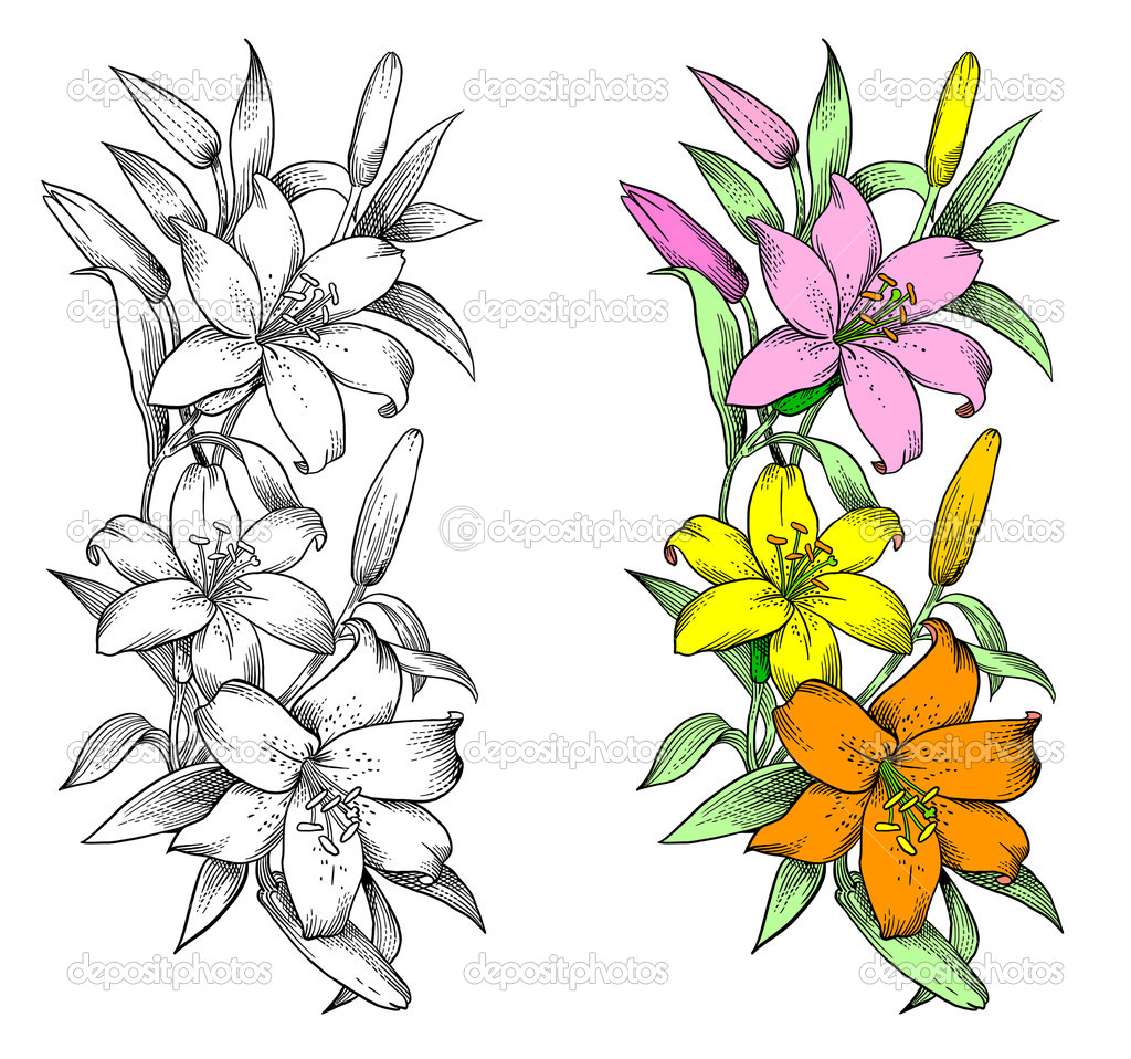 Vector lily flower engraving stylization stock vector vector lily flower isolated on white background engraving stylization may be used as print vector by irinagureeva dhlflorist Images