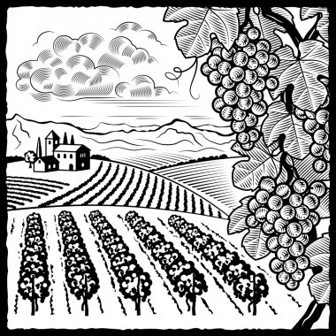 Vineyard landscape black and white
