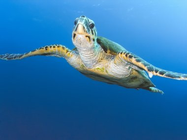 "Картина, постер, плакат, фотообои ""морская черепаха "", артикул 5522932"