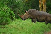 Photo Rhinoceros in the wild