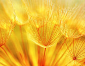 Photo Abstract dandelion flower background