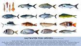 Fotografia classifica acqua salata di pesce specie isolata su bianco