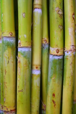 Bamboo cane food sugar green trunks