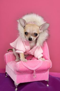 Fashion chihuahua dog barbie style pink armchair