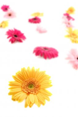Gerbera yellow flower colorful blur flowers background