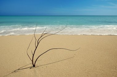 Black coral branch on caribbean beach shore