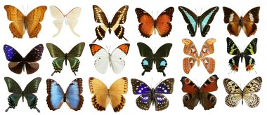 Butterflies collection varied colorful butterfly rows isolated on white stock vector
