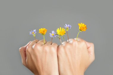 Concept of plant growing from woman hands