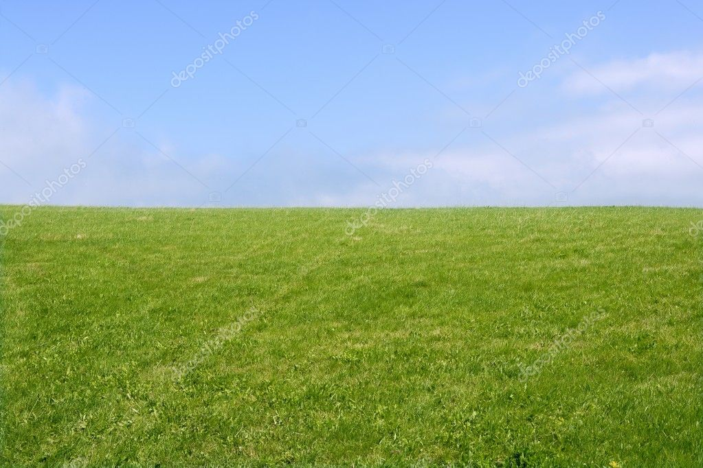 Green meadow horizon and blue sky