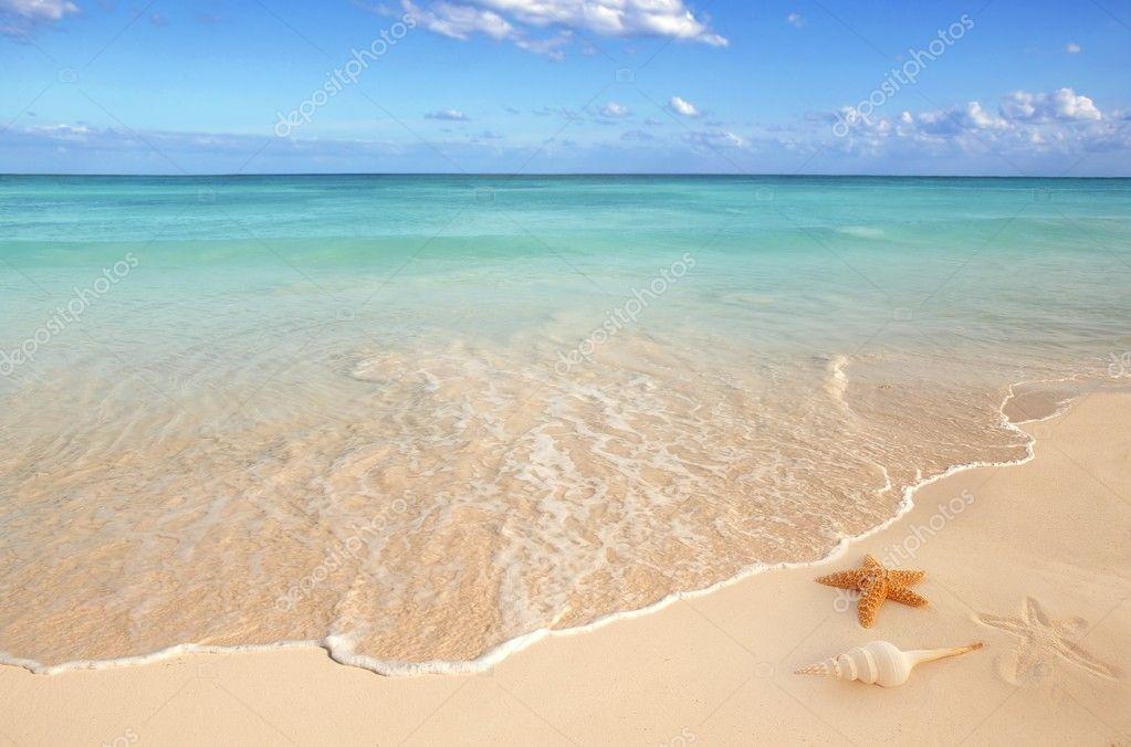 Фотообои Sea shells starfish tropical sand turquoise caribbean