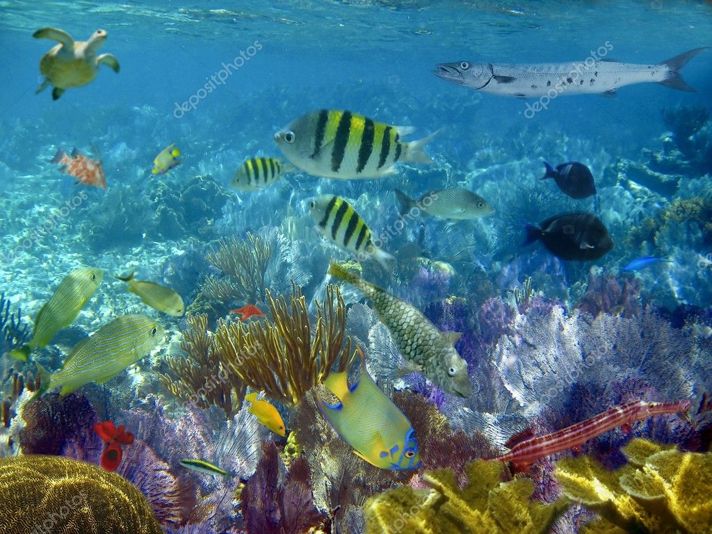 Caribbean reef tropical fishes underwater stock photo for Caribbean reef fish