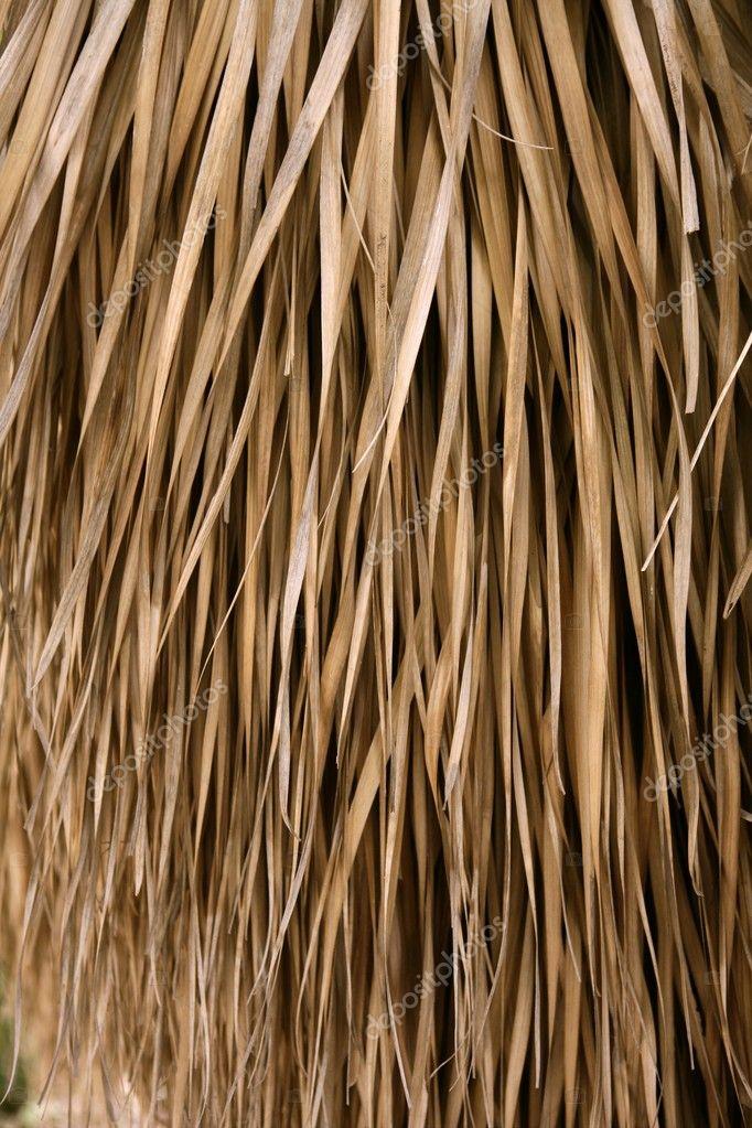 Fotos de palmas secas 44