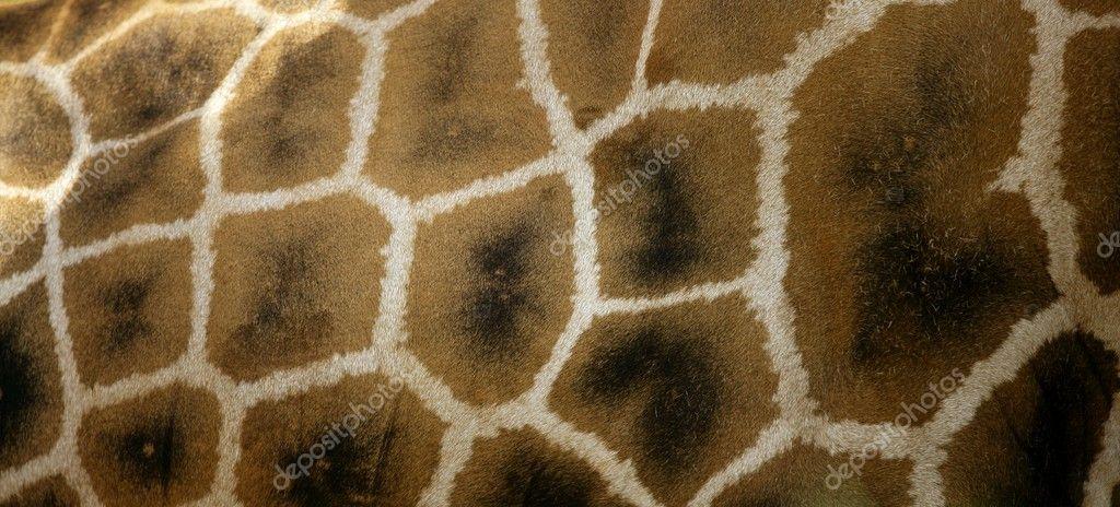 Girafe from Africa. Skin texture