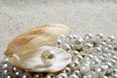 Fotografie Beach white sand pearl shell clam macro